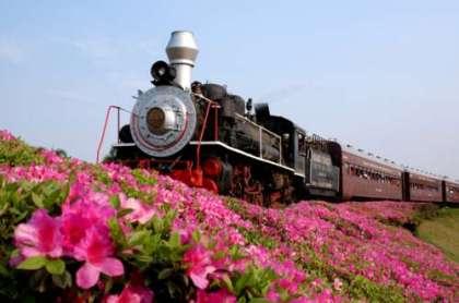 trem-flores